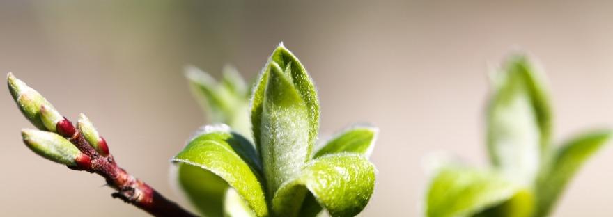 Spring: New buds